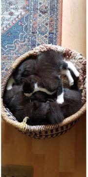 Zuckersüsse Baby Katzen