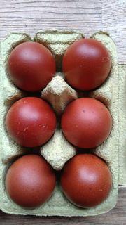 maran Eier Hühnereier