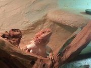 Reptilien Abnahme kein Hsndel