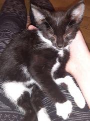 Kätzchen sucht dringend ein Zuhause