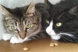 Bild 4 - Katze Martha gerade 1 Jahr - Bergwitz Klitzschena