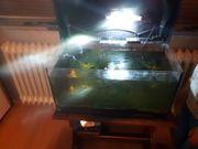 kleines Aquarium mit Zubehör und