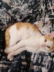 Katzenbaby inklusive Zubehör sucht liebevolles