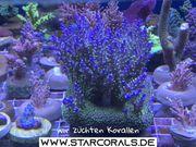 Verkauf und Versand von Korallen