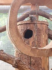 junge chinesische Baumstreifenhörchen