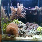 Meerwasseraquarium - Dennerle Nano Marinus - Nano