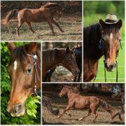 Reitbeteiligung Pflegebeteiligung Pferd sucht Mensch