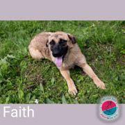 Faith- auf Deutsch Vertrauen und