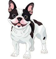 Französische Bulldogge gesucht