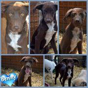 Benny benötigt Menschen mit Geduld
