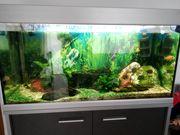 Aquarium 250 Liter KOMPLETT