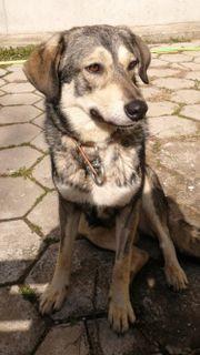 unkomplizierter Traumhund sucht seine Familie