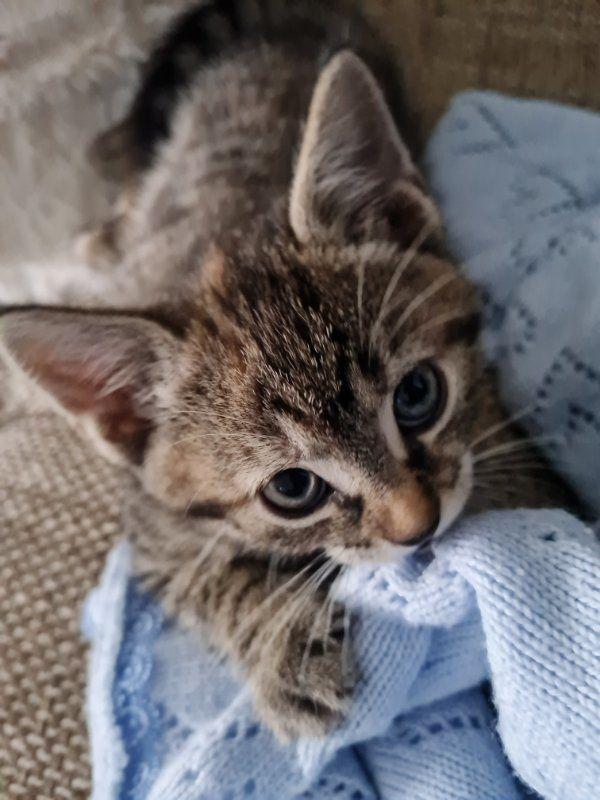 Süße Kätzchen abzugeben Kitten