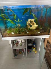 Aquarium 300l abzugeben
