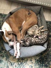 Capricho menschen- kinder- und katzenliebender
