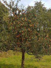 Obstwiese mit verschidenen Obstbäumen in