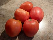 Tomaten Samen sehr seltene Sorte