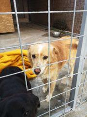Mia - eine kleine Hunde Oma