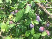 Garten mit Obstbäumen südwestlich von