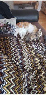 Katze vermisst in Götzis