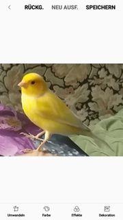 Hilfe Vogel Kanarienvogel entflogen Besitzerin