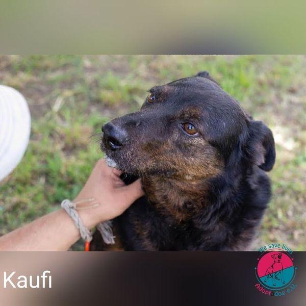 Kaufi - junggebliebende Hundedame mit Stil