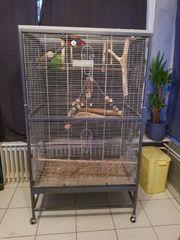 Verkaufe 2 Vögel mit Käfig