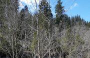 Suche Wald zum kaufen Pachten