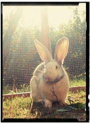 Kaninchendame sucht schönes Zuhause