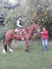 Ponyreiten Ponykutschfahrten Reiten für Kinder