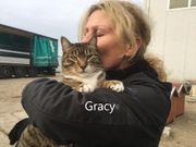 Gracy geb 2017 sucht liebevolles