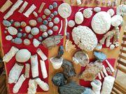 Fossilien - komplette Sammlung