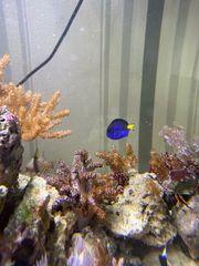 Meerwasseraquarium all inclusive