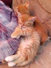 Katzenbabys Kitten Kätzchen