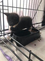 noch ein süßes kleines Kätzchen