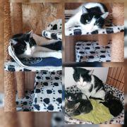 Katze Lilly geimpft gechipt entwurmt