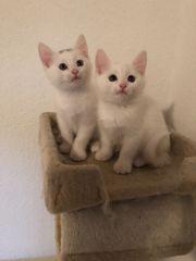 2 Süße Katzen Babys Kitten