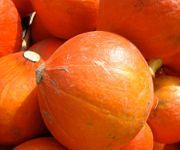 6 HOKKAIDO Kürbis Samen keimfähig