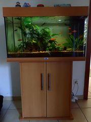 Gebrauchtes komplettes Juwel Rio 125-Aquarium