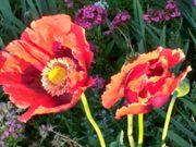 Vers Pflanzen und Blumen