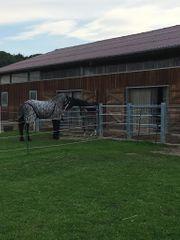 Pferdebox -Pony Weide Paddockboxen Vollpension