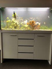 Eheim 460l Aquarium mit Technik