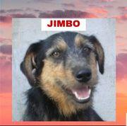 JIMBO - Temperamentvoller Terrier Mix mit