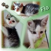 Wunderschöner Baby Kater Kitten Flo