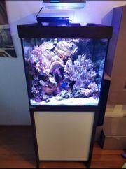 Meerwasser Aquarium komplett mit viel