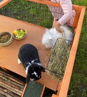 Kaninchen mit Außengehege