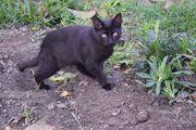 Bella Katze aus dem Tierschutz