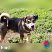Bard - Ein Hund mit einer