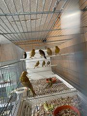 verschiedene Terrarienvogel Wasserschläge und fahr
