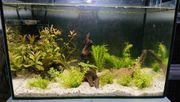 Aquarium 25l 40x25x25cm mit Filter